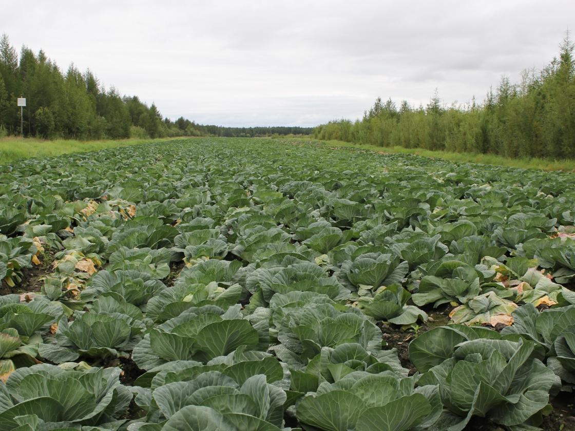 В Правительстве Российской Федерации утвердили программу развития сельского хозяйства в Магаданской области